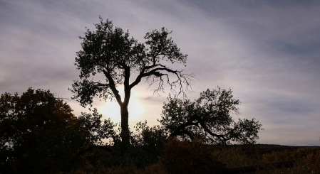 dancing tree in the evening light
