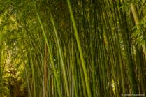 Timber Bamboo