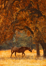 Appy and Fall Oaks