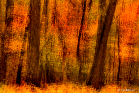 Impressionistic Forest 10-29-19 045