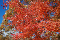 A torrent of Leaves