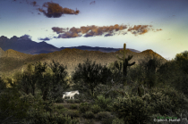 Wild Horse at Sunset, Superstition wilderness