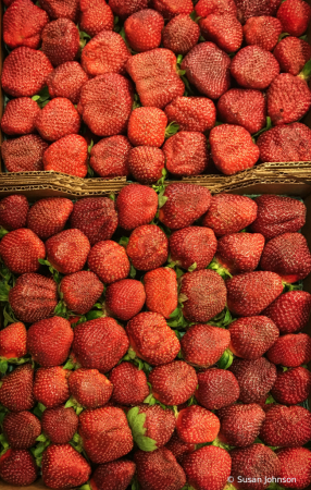 Perfect Strawberries for the Perfect Jam