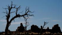 Silhouette against the desert sky