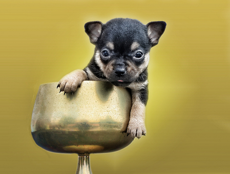 A Pup In A Cup
