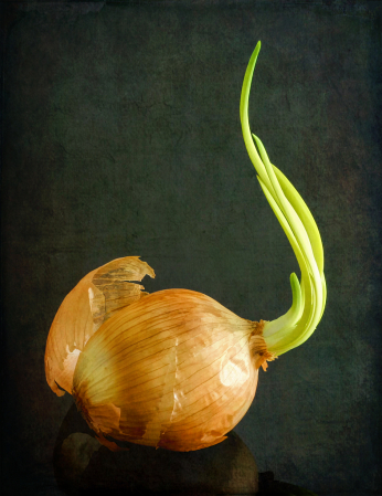 Sprouted Onion