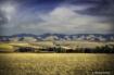 Landscape - Blue ...