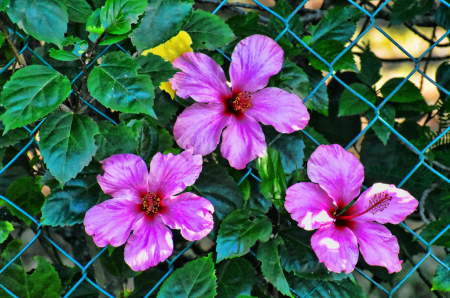 FLOWERS OVER THE FENCE