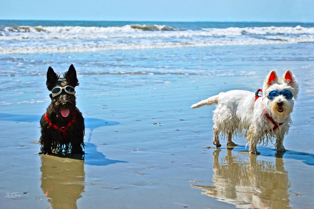 Beach Goggles - ID: 15776967 © Zelia F. Frick