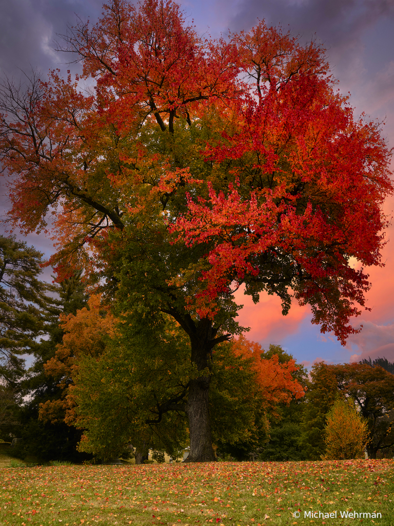 Tree and sky colors - ID: 15776946 © Michael Wehrman