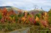 Beautiful Fall!