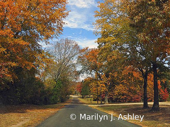 East Texas Fall - ID: 15779695 © Marilyn J. Ashley