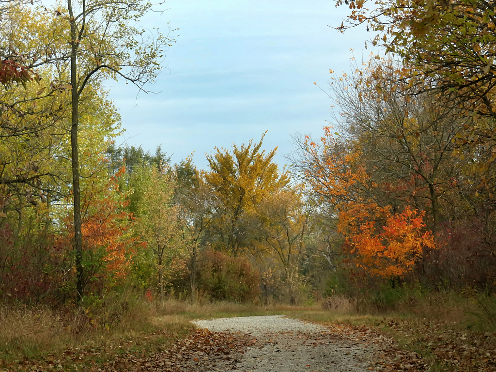 Fall In The Greenbelt