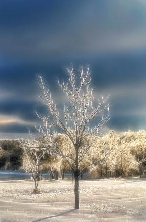 Icy Trees Sparkle