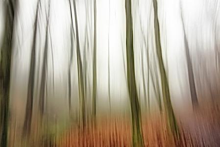 Loony Woods
