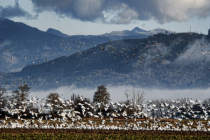 Returning Flocks