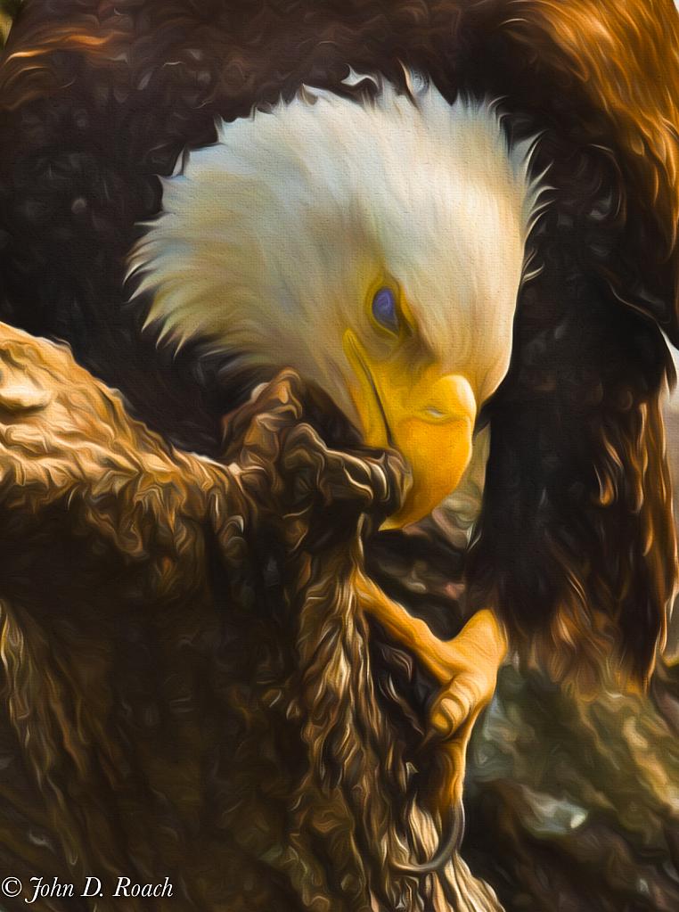 Eagle Feaking - ID: 15780904 © John D. Roach