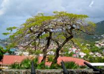 St. Thomas U.S. Virgin Island