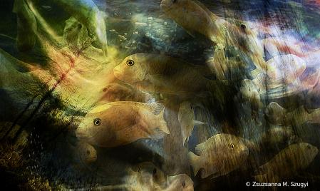 Fish  fantazie