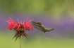 Bee Balm Snack