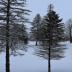 © Theresa Marie Jones PhotoID # 15781500: Winter Wonderland