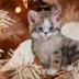 © Theresa Marie Jones PhotoID # 15781786: Angel Kitty