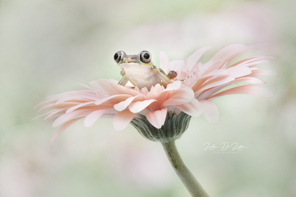 Frog of Happiness