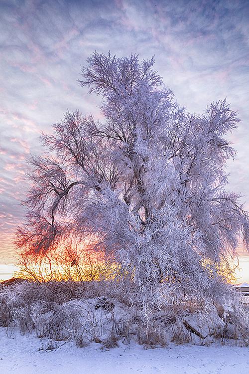 Winter 2019 #0780 - ID: 15782015 © Raymond E. Reiffenberger