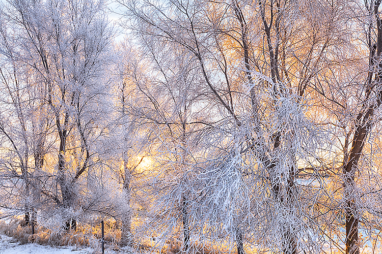Winter 2019 #0799 - ID: 15782018 © Raymond E. Reiffenberger