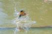 diving fishing