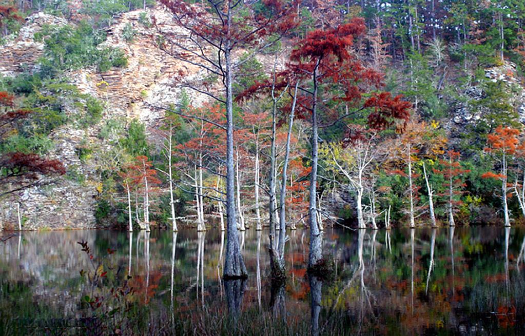 Swamps Rock