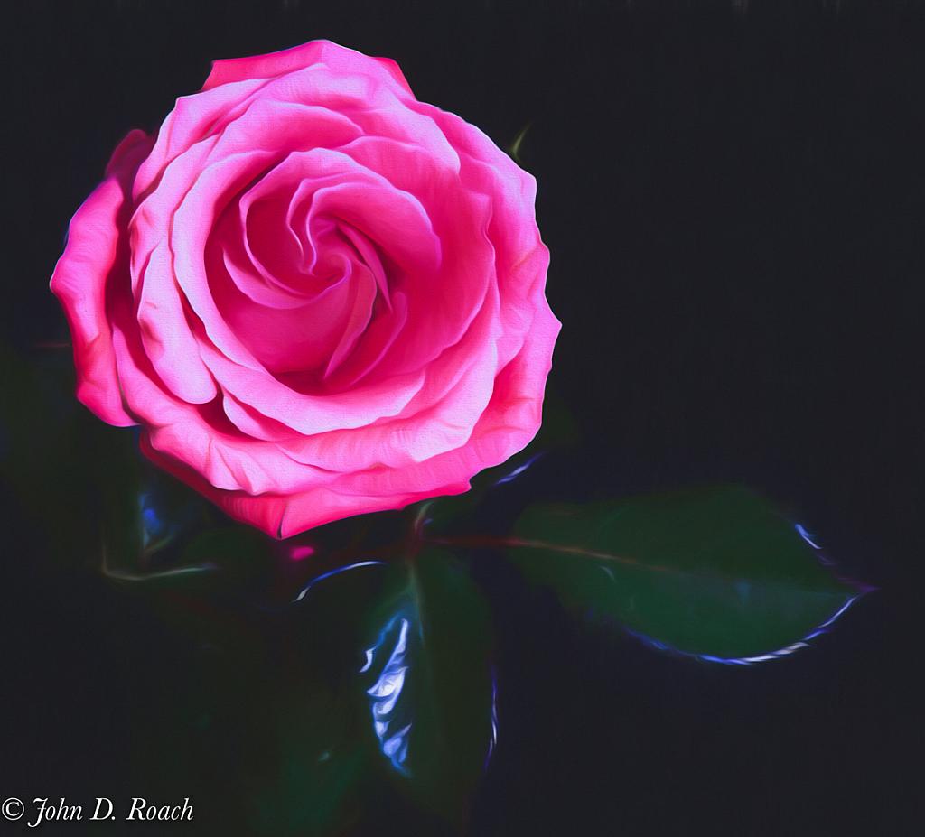 Painted Rose - ID: 15782598 © John D. Roach