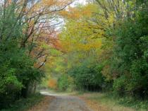 More Greenbelt Autumn