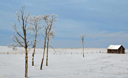 Winter Aspens and Cabin