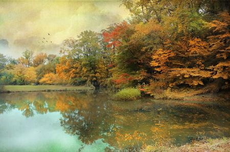 Driscoll Pond