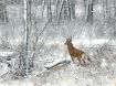 The Winter Buck