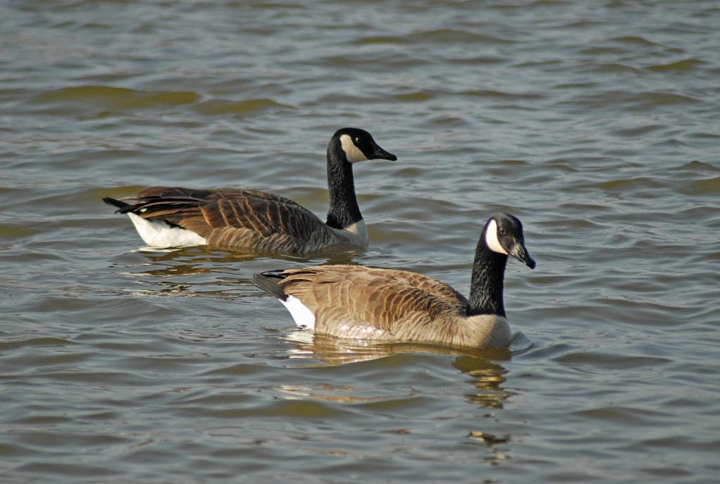 Duo Swim