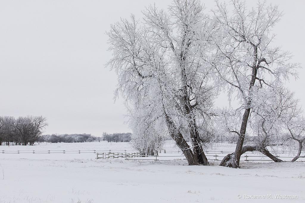 Snow beauty - ID: 15785378 © Roxanne M. Westman