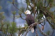 Eagle 0305