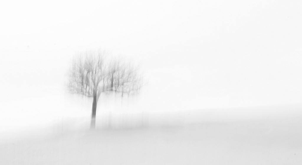 Dreamy Snowscape