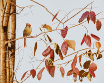 Female Cardinal and Leaves