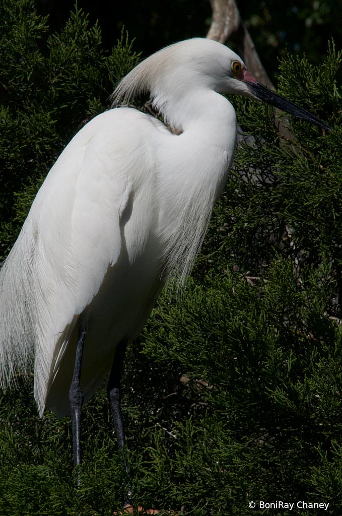 Feathes and Fur - ID: 15786083 © BoniRay Chaney