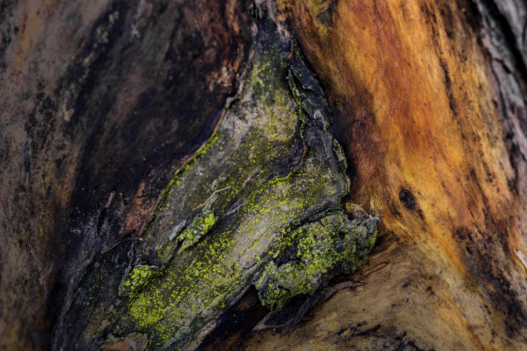 Colors On An Old Log - ID: 15786201 © Philip B. Ludwig