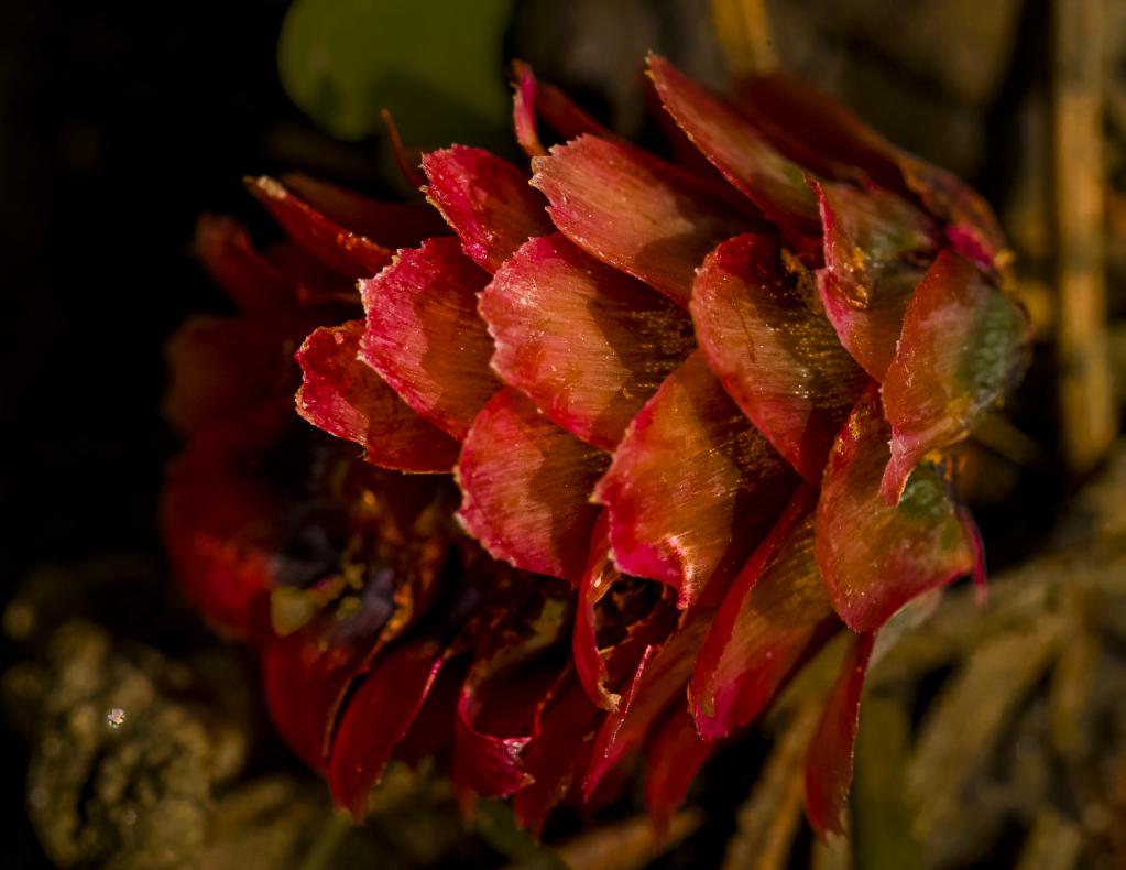 A Colorful Seed Head - ID: 15786204 © Philip B. Ludwig