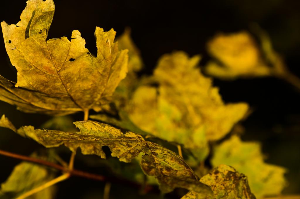 Fall Leaves - ID: 15786205 © Philip B. Ludwig