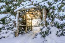 Enter the Winter Garden