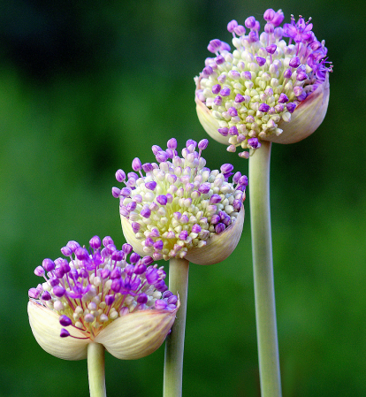 Flowers in thirds