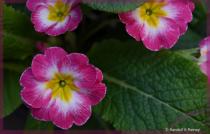 Spring Flowers in Bloom . . .