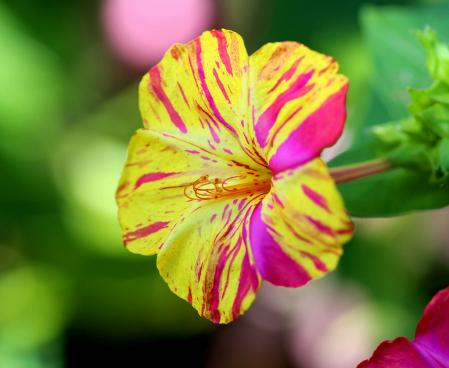 Beautiful Little Flower