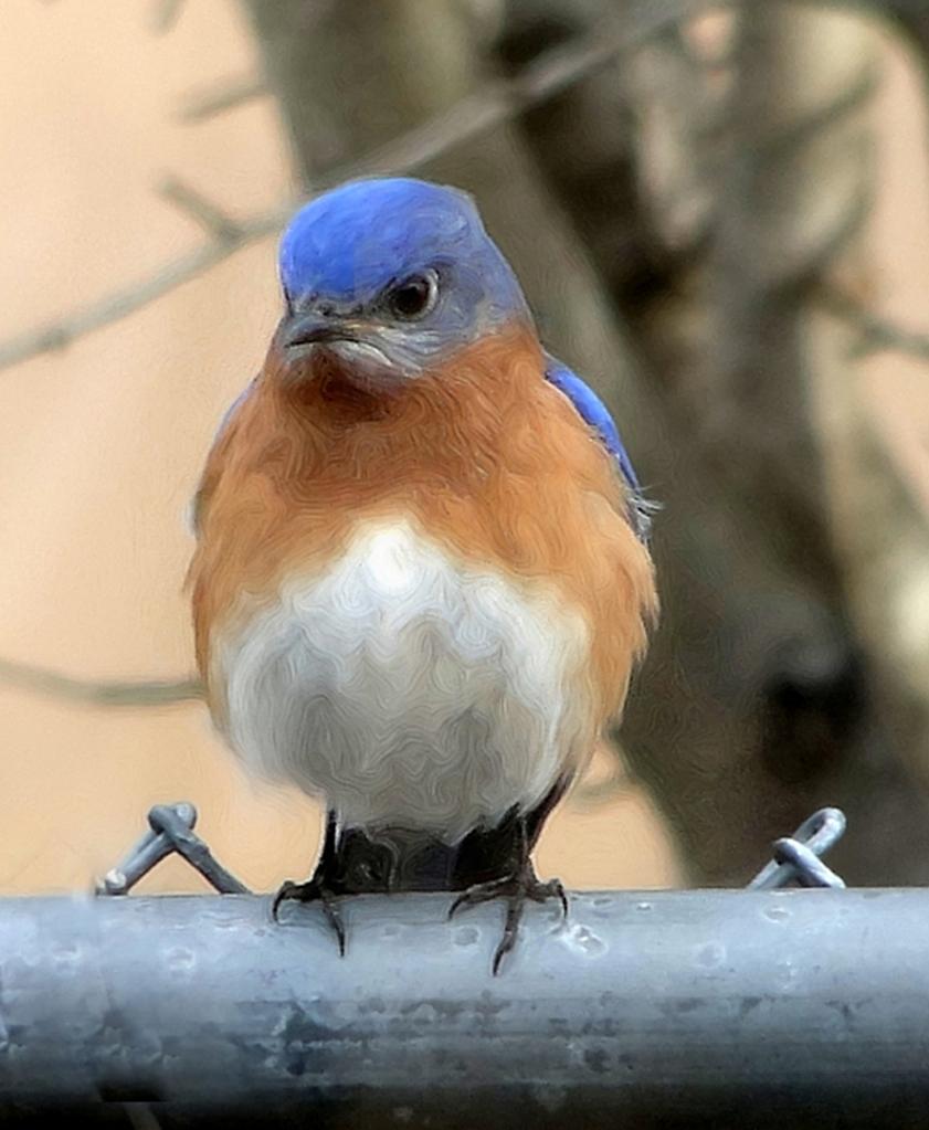 The Bluebird Of Grumpiness